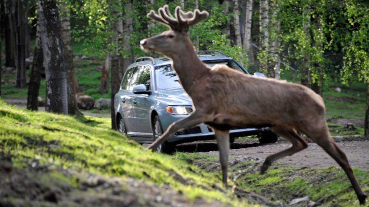 moose_test_elk_test_2-728x409.jpg