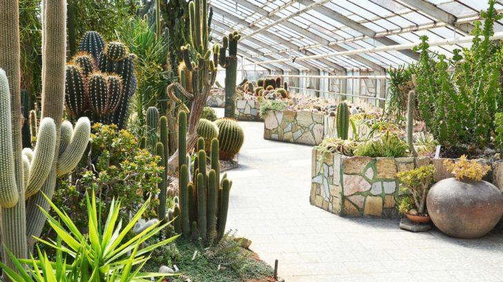 a-kaktus-728x409.jpg