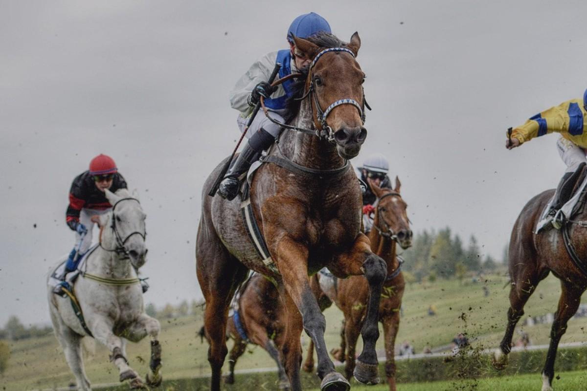 Za koňskými dostihy vMitsubishi L200
