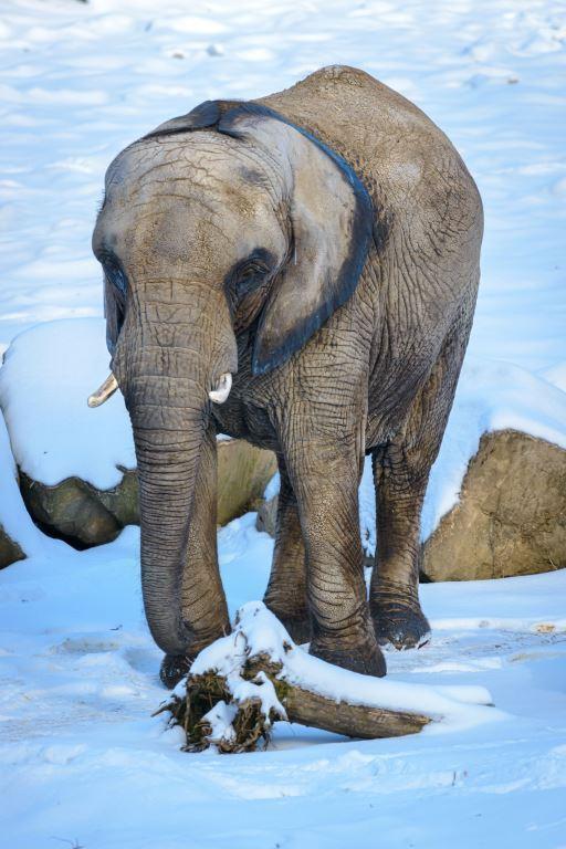 slon-zoo_zlin.jpg